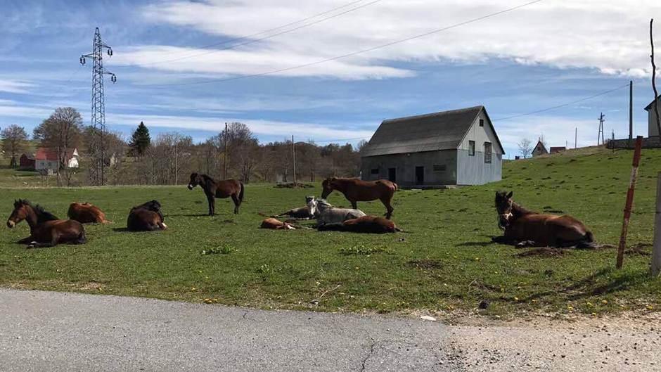 konji Žabljak odmor selo livada konj vrijeme