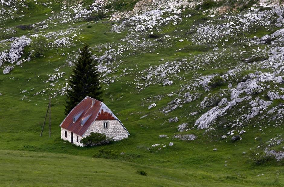 ovce, pastir, planina, žabljak, prirodne lepote
