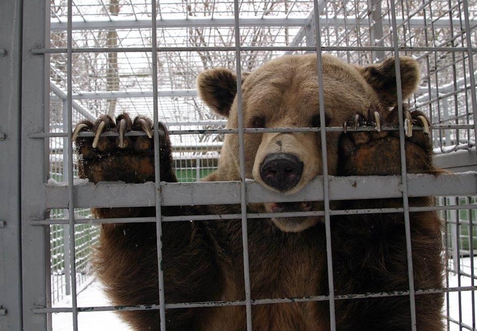 medved meda medvedi životinja životinje zoo vrt
