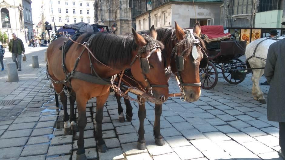 kočije, konji, Beč