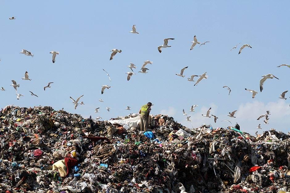 vinča, deponija, smeće, đubre otpad vinca galeb galebovi